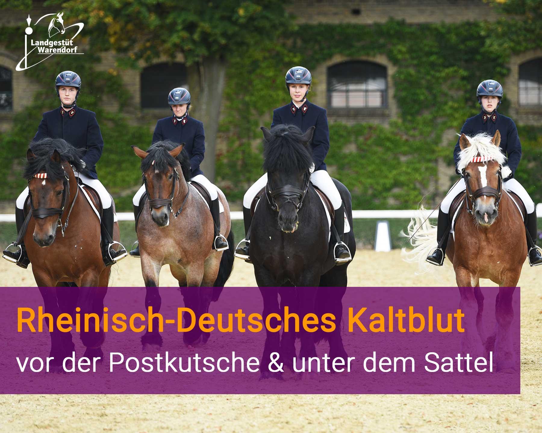 Rheinisch-Deutsches Kaltblut