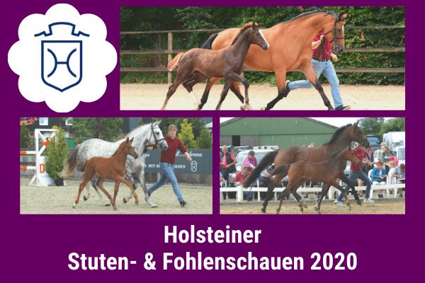 Holsteiner Fohlen- & Stutenschauen