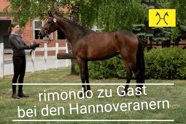 rimondo zu Gast in Hannover