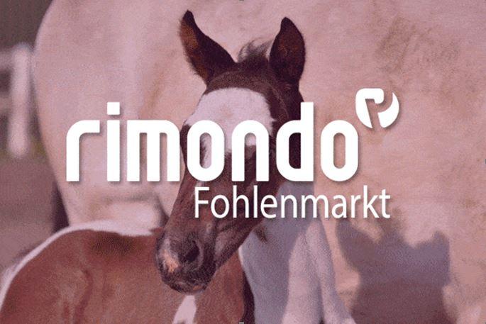 Im rimondo Fohlenmarkt kannst du Fohlen kaufen und verkaufen