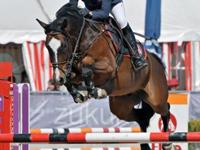 Casall Nachkommen als Sportpferde